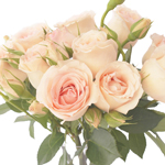 Perfumela Peach Spray Garden Roses