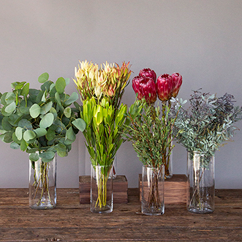 Creamy Peach Protea Flower Collections