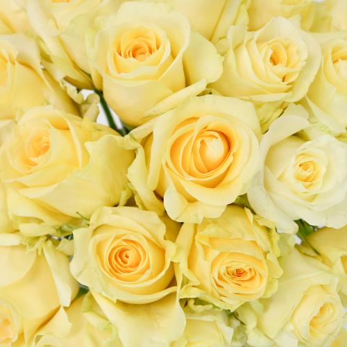 Lemon Sherbet Sweetheart Roses