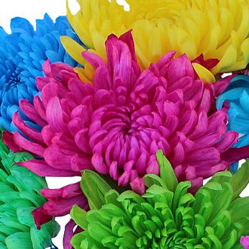 Farm Mix Enhanced Cremon Flower