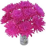 Tinted Pink Zembla Cremon Flower