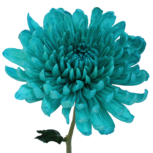 Turquoise Wedding Cremon Flower