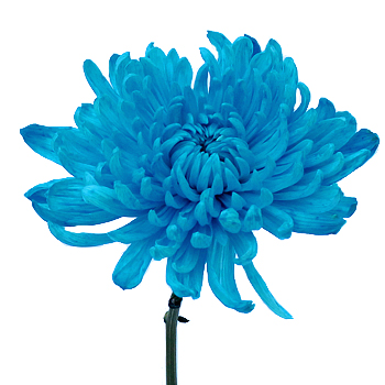 Electric Blue Wedding Flower
