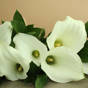Off White Mini Callas Centerpieces