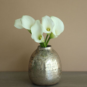 Farm Fresh Cut White Mini Calla Lily Flower