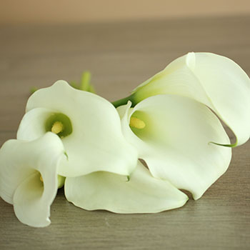 Crystal White Mini Calla Lily Flower Fiftyflowers Com