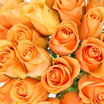 Peach Sweetheart Roses