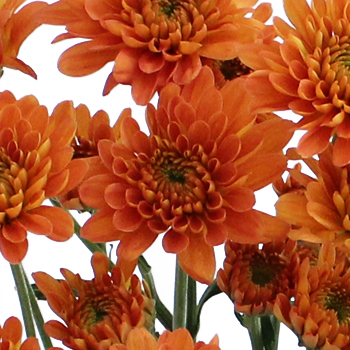 Fall Orange Dahlia Style Cushion Flower