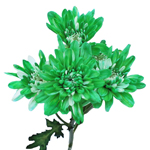 White Polaris Cushion Green Tinted Flower
