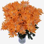 White Polaris Cushion Orange Tinted Flower