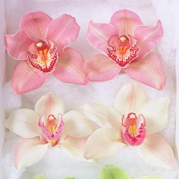 Cymbidium Orchid Tubed Blooms