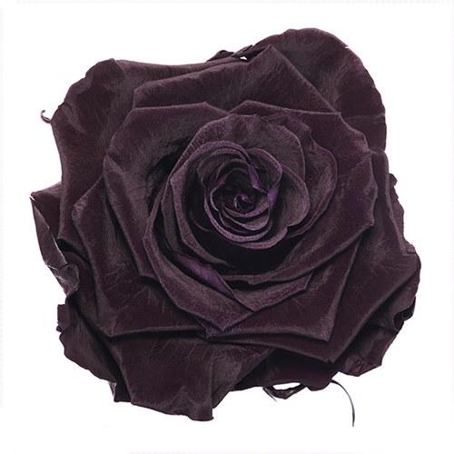 Preserved Deep Purple Rose