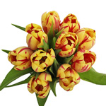 Grand Perfection Yellow and Red Tulips Wholesale Flower Bunch