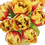 Horizon Yellow and Red Double Tulips Wholesale Flower Bunch