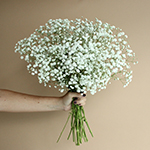 Baby's Breath White Wholesale Flower Bunch in a hand