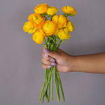 Yellow Ranunculus Wholesale Flower Bunch in a hand