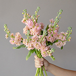 Peach Stock Wholesale Flower Bunch in a hand