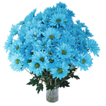 Zamora Novelty Daisy Blue Tinted Flower