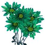 Zamora Novelty Daisy Green Tinted Flower