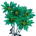 Zamora Novelty Daisy Green Tinted Flower