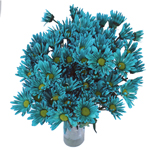 Zamora Novelty Daisy Blue Tinted Flower