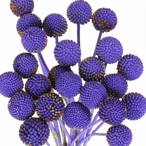 Mystical Grape Billy Balls Flower