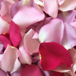 Mixed Pink Dried Rose Petals