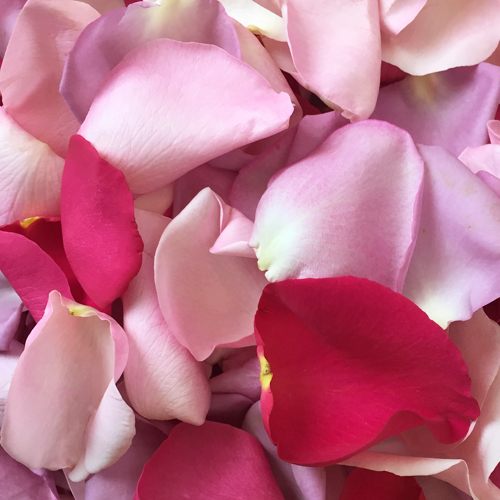 Shades of Pink Rose Petals