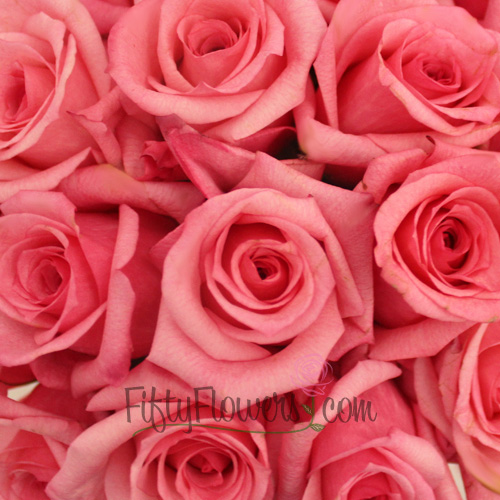 Pink Dark Engagement Rose