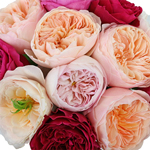 David Austin Garden Rose Assorted