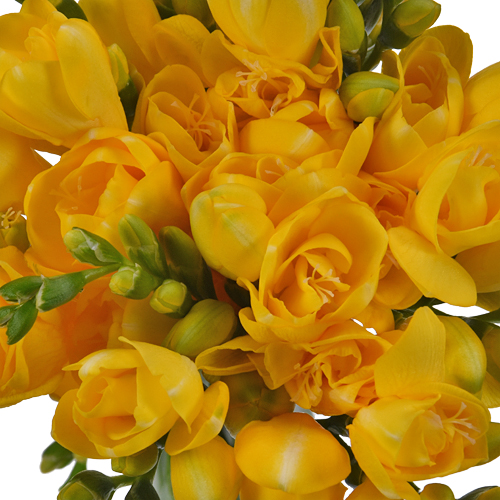 Yellow Designer Freesia Flower