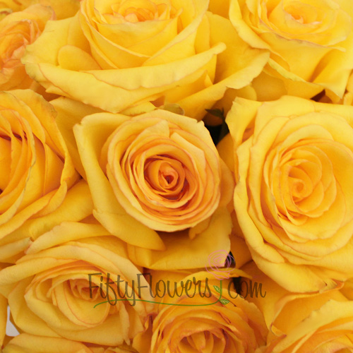 Dejavu Golden Yellow Rose