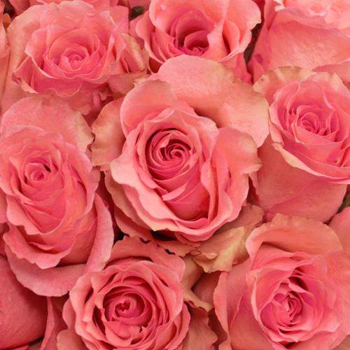 Dekora Bulk Pink Roses