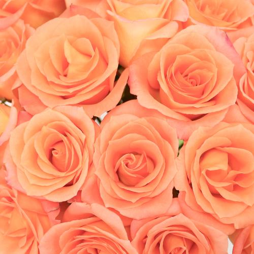 Tangerine Sunrise Sweetheart Roses