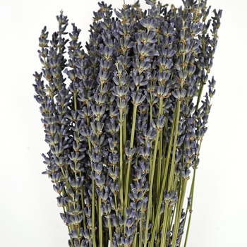 Dried Lavender Bulk Bunches