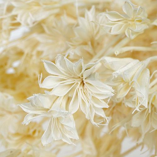 Dried Nigella Flowers