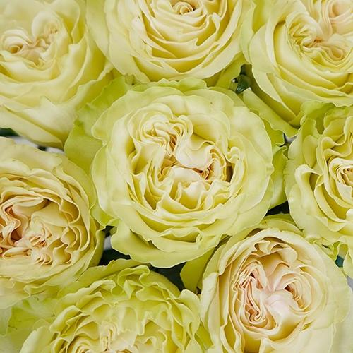 Vintage Petticoat Rose