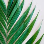 Premium Emerald - Buy Bulk FREE SHIPPING!