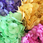 Bulk Hydrangea Assorted Tinted Flower