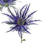 Bulk Thistle Metallic Blue