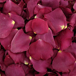 Lovely Dried Rose Petals