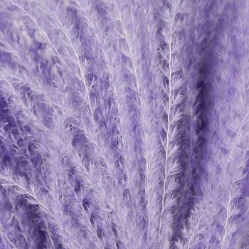 Lavender Dried Eulalia Grass