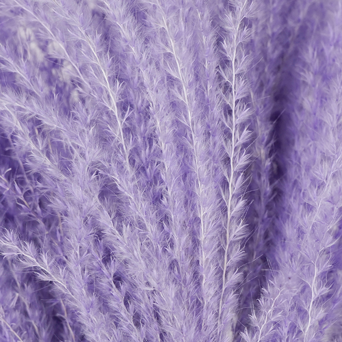 Lavender Dried Eulalia Grass