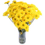 Yellow Factor Novelty Daisy Buy Bulk