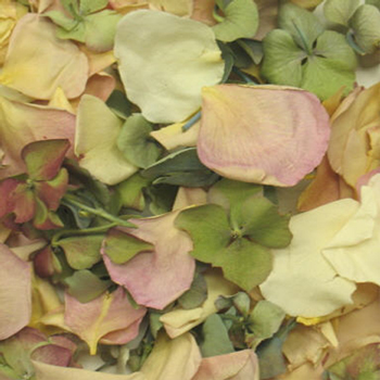 Fairytale Wedding Dried Rose Petals