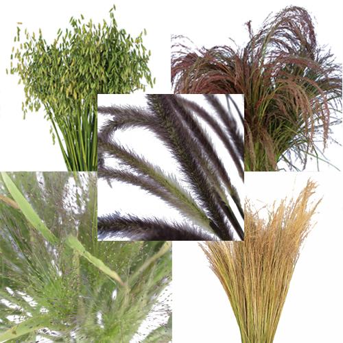 Fall Ornamental Grass Medley Fresh Cut Greenery