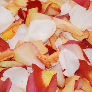Terracotta Rose Petals for sale