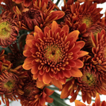 Autumn Bronze Dahlia Style Cushion Flower
