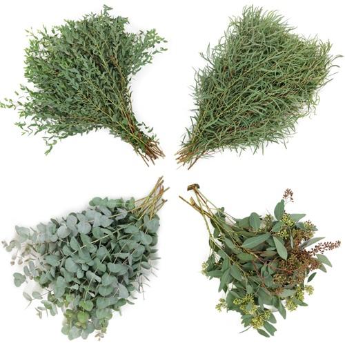 Farm Fresh Assorted Eucalyptus Greenery Mix