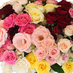 farm mix spray roses